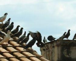 Nieproszeni goście na dachu